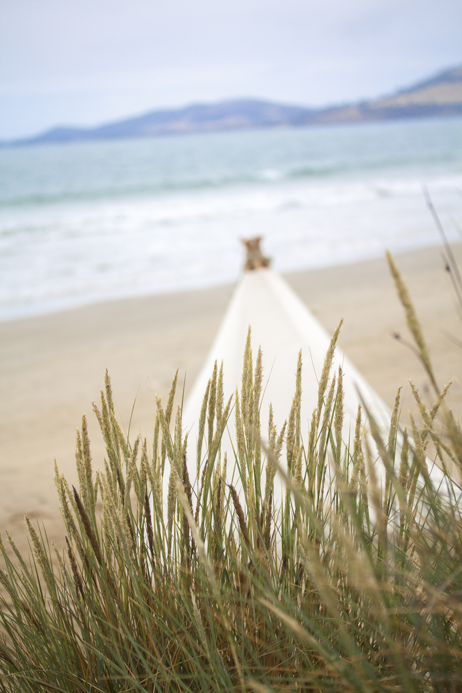 Style my day - Romantic Beach Proposal - Tasmania